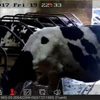 Calving Camera installed by MKS Security